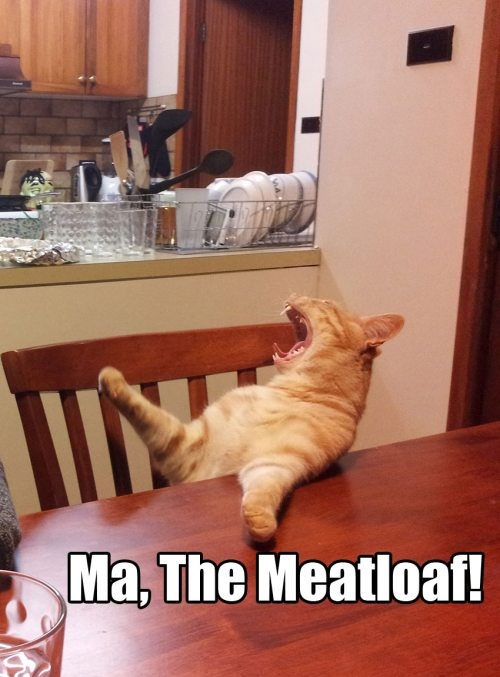 meatloaf cat