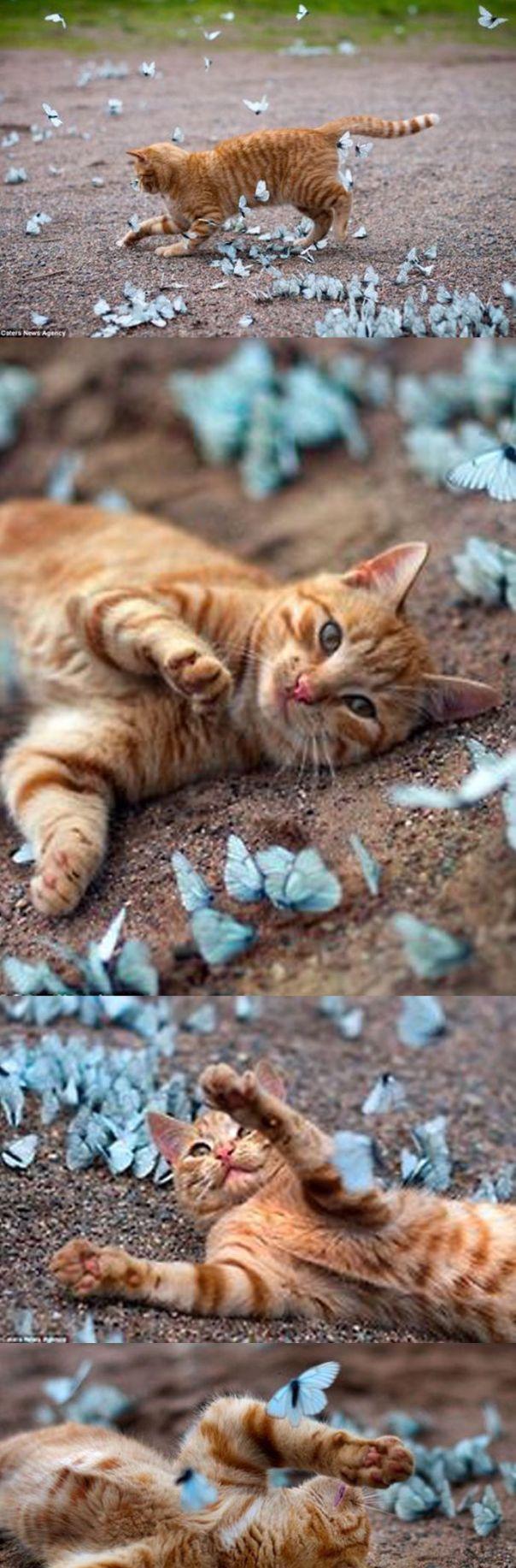 orange cat chasing paper