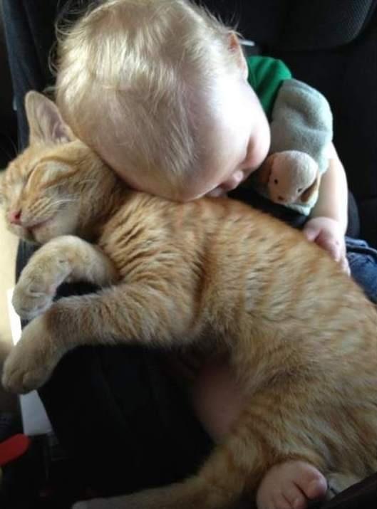 orange cat with baby
