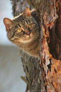 cat in a tree 9 29 2013