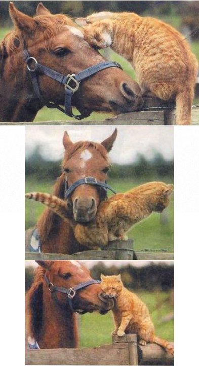 cat and horse 10 16 13