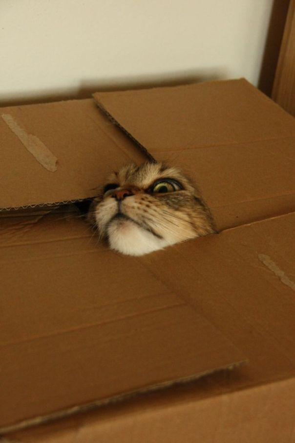 cat in a box 10 7 2013