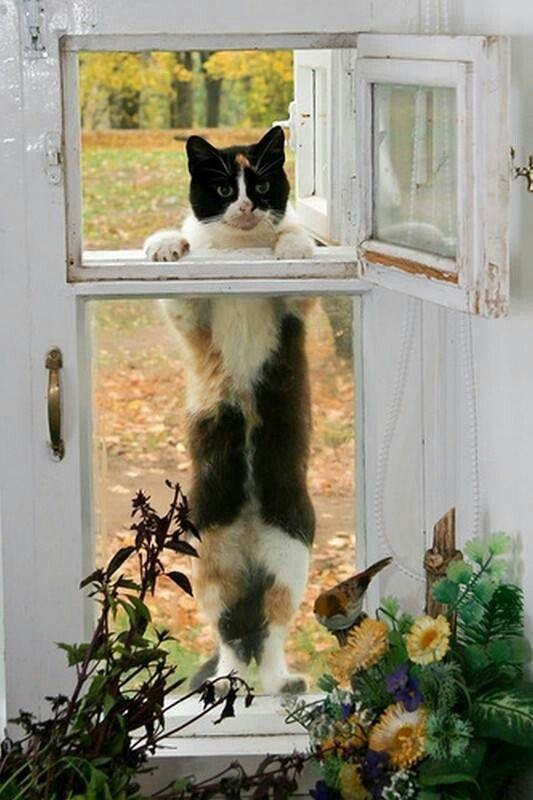 window kitty 10 18 13