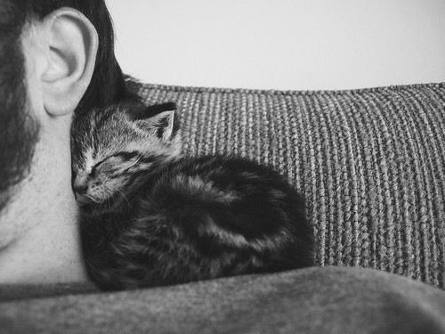 cat1 11 3 13
