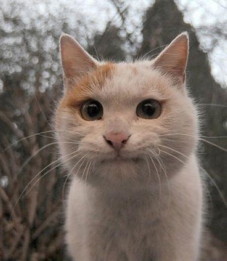 cat8 11 3 13