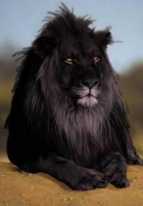 Lion 3 18 14